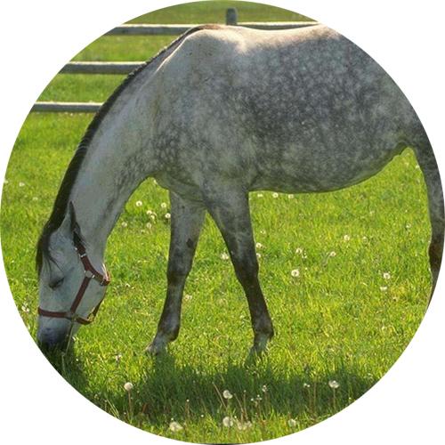 нарисовать глаза лошади,