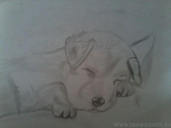 рисунки щенков карандашом: