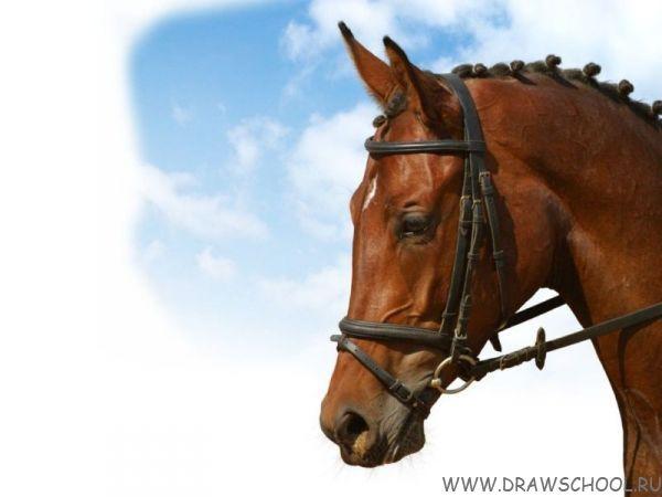 """Серия уроков """"Рисуем лошадей"""""""