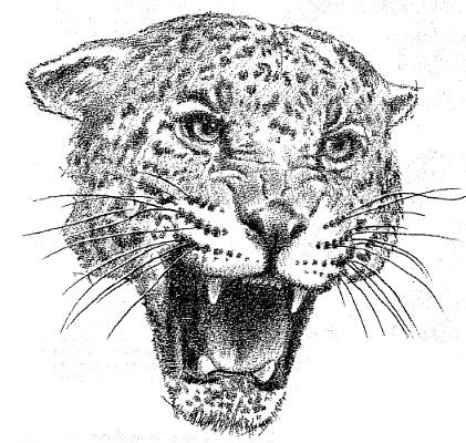 Как нарисовать голову дикой