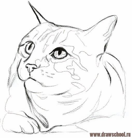 Как нарисовать из красок кота