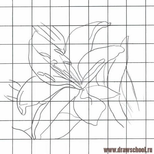 как рисовать лилию поэтапно карандашом: