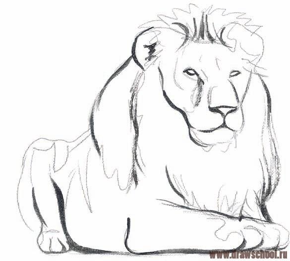 Как нарисовать льва?