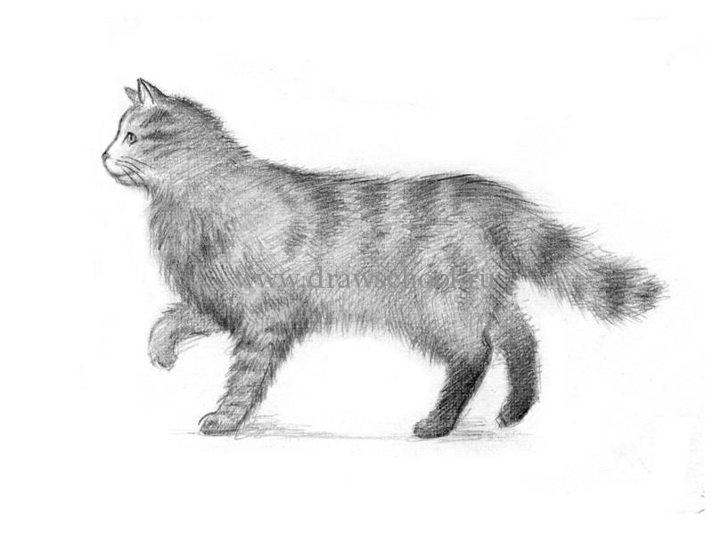 Как рисовать животных карандашом кошку